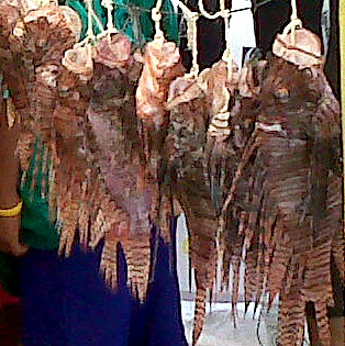 Mahahual Lion Fish tournament