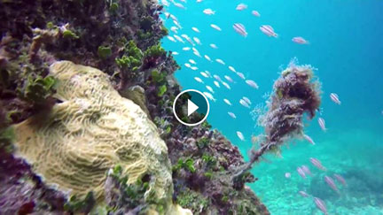 MahahualEcotours spearfishing